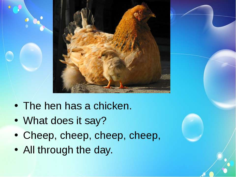 The hen has a chicken. What does it say? Cheep, cheep, cheep, cheep, All thro...