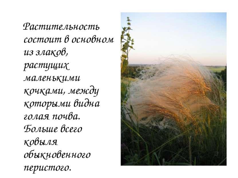 Растительность состоит в основном из злаков, растущих маленькими кочками, меж...