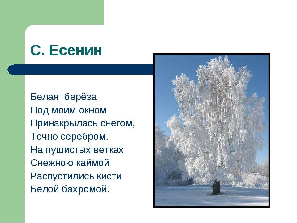 С. Есенин Белая берёза Под моим окном Принакрылась снегом, Точно серебром. На...