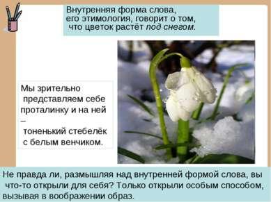 Внутренняя форма слова, его этимология, говорит о том, что цветок растёт под ...