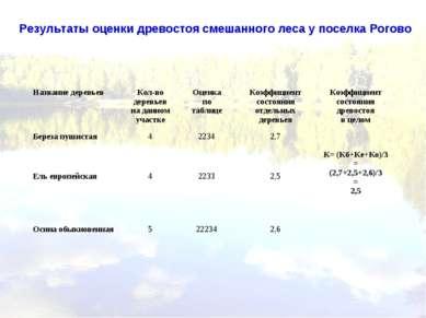 Результаты оценки древостоя смешанного леса у поселка Рогово