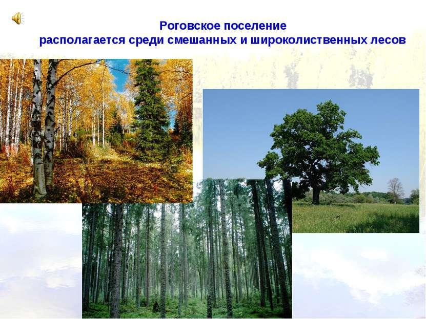 Роговское поселение располагается среди смешанных и широколиственных лесов