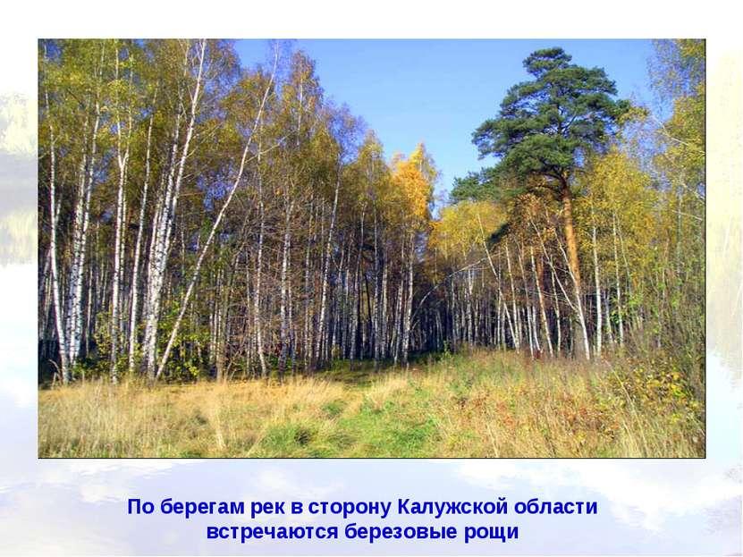 По берегам рек в сторону Калужской области встречаются березовые рощи