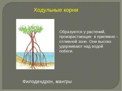 Образуются у растений, произрастающих в приливно - отливной зоне. Они высоко ...