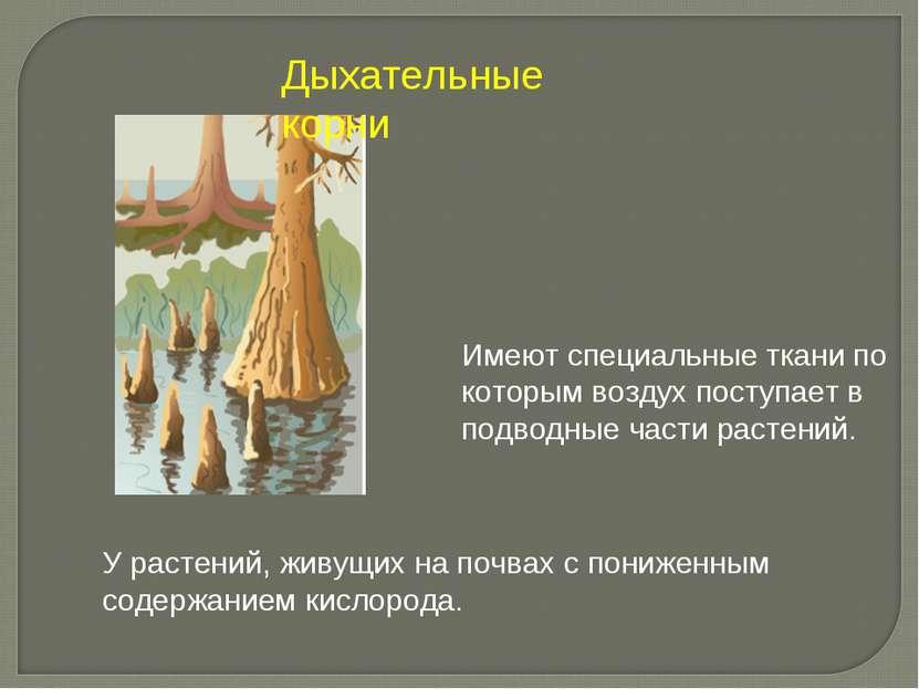 Имеют специальные ткани по которым воздух поступает в подводные части растени...