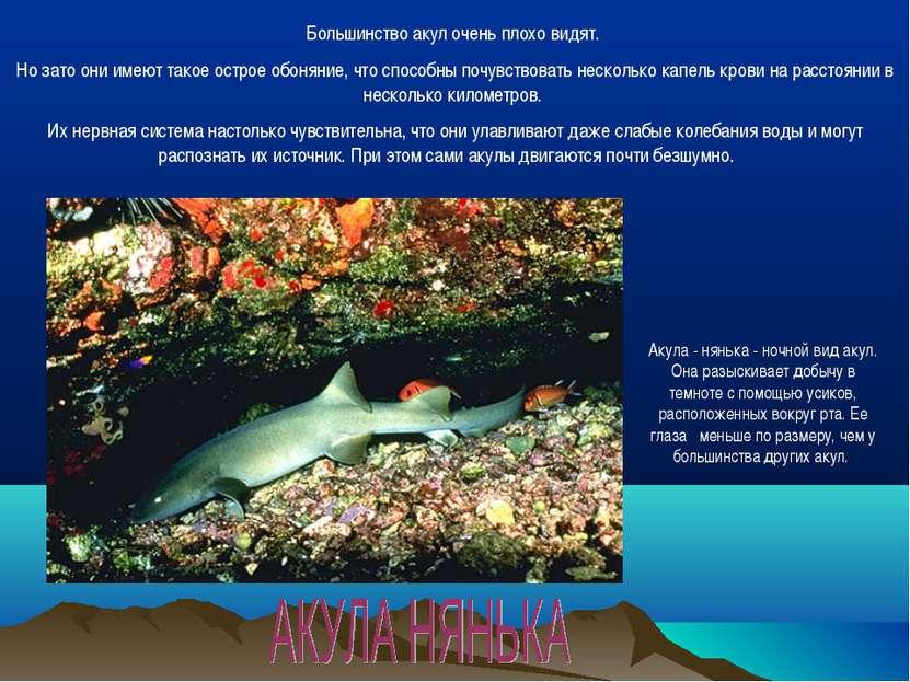 Большинство акул очень плохо видят. Но зато они имеют такое острое обоняние, ...
