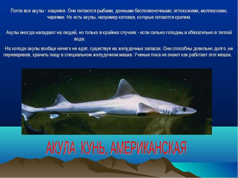 Почти все акулы - хищники. Они питаются рыбами, донными беспозвоночными, игло...