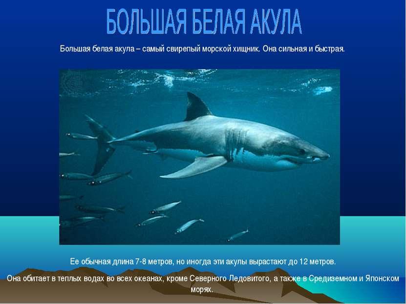 Большая белая акула – самый свирепый морской хищник. Она сильная и быстрая. Е...