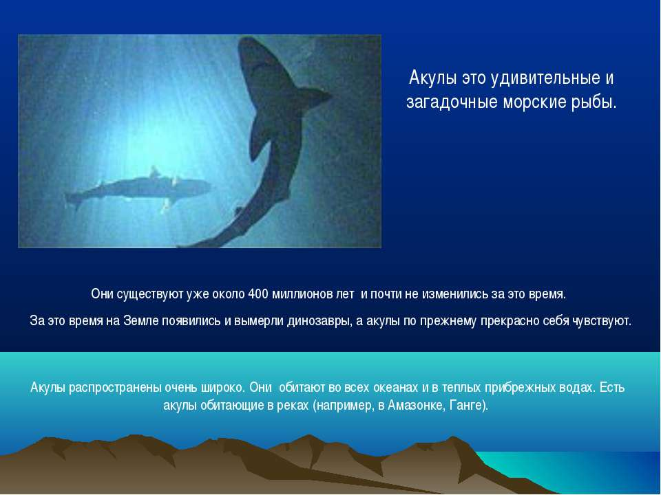Они существуют уже около 400 миллионов лет и почти не изменились за это время...