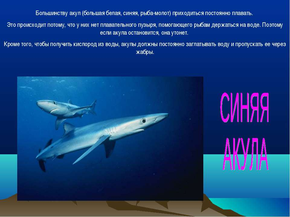 Большинству акул (большая белая, синяя, рыба-молот) приходиться постоянно пла...