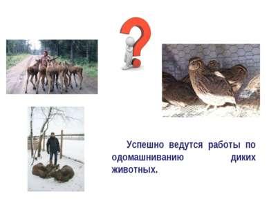 Успешно ведутся работы по одомашниванию диких животных.