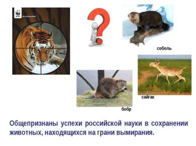 Общепризнаны успехи российской науки в сохранении животных, находящихся на гр...
