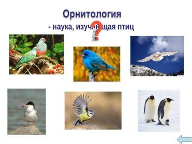 - наука, изучающая птиц