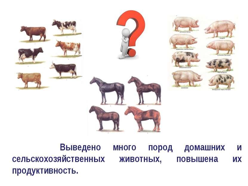Выведено много пород домашних и сельскохозяйственных животных, повышена их пр...