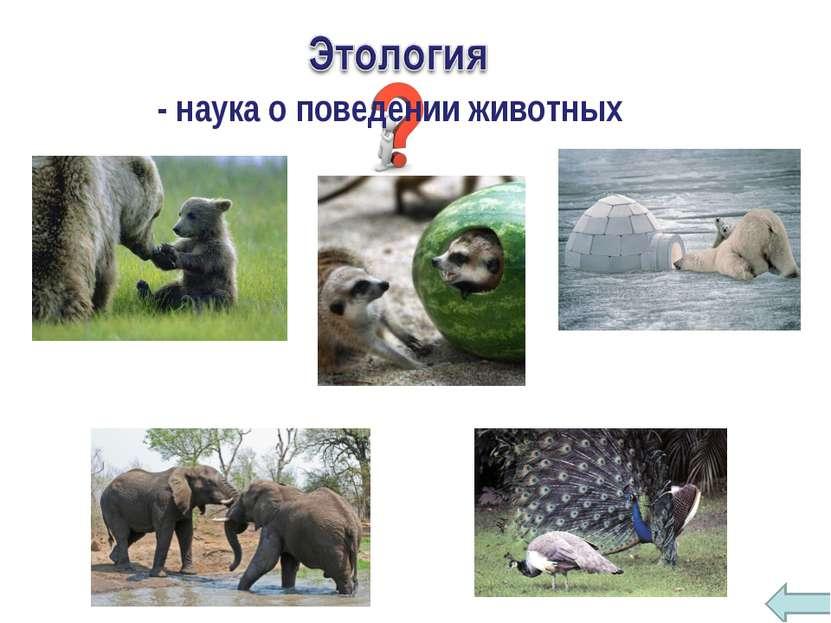 - наука о поведении животных