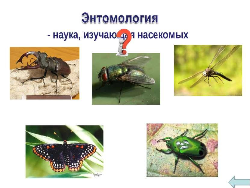 - наука, изучающая насекомых