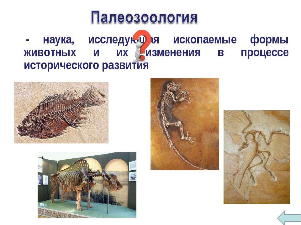 - наука, исследующая ископаемые формы животных и их изменения в процессе исто...
