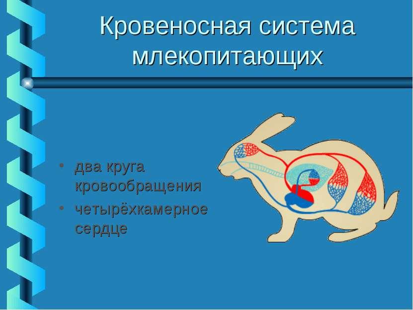 Кровеносная система млекопитающих два круга кровообращения четырёхкамерное се...