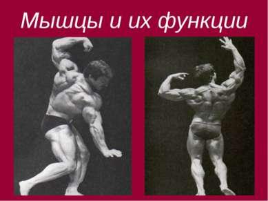 Мышцы и их функции