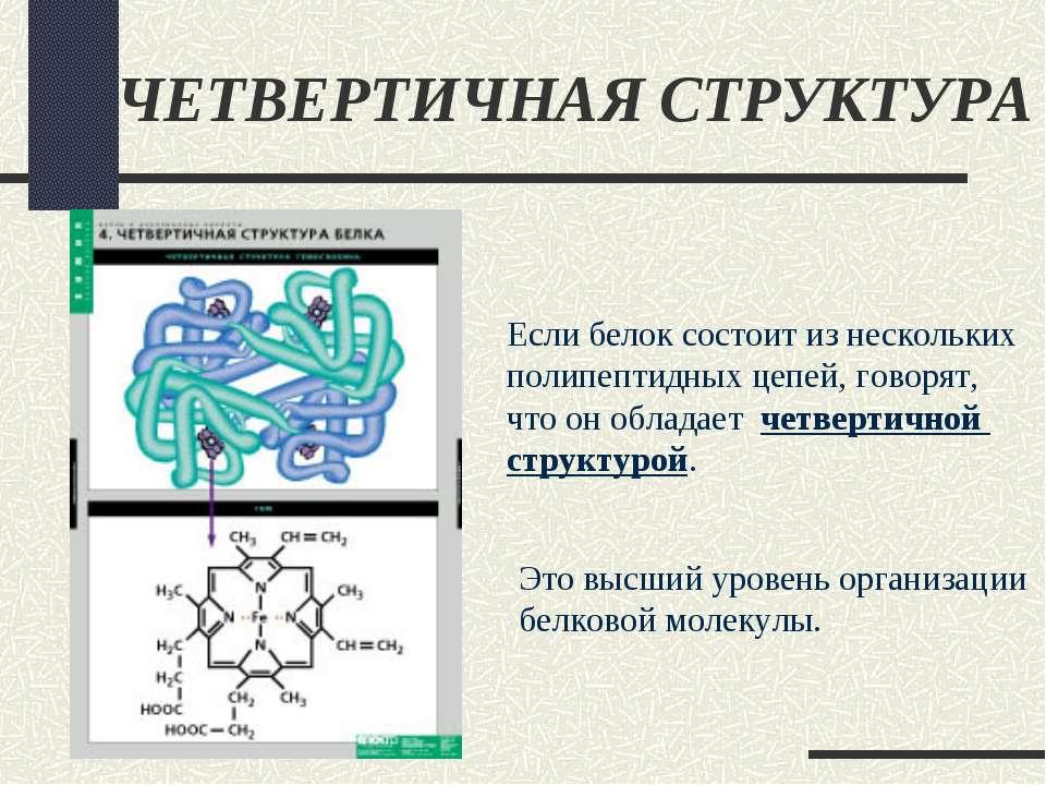 ЧЕТВЕРТИЧНАЯ СТРУКТУРА Если белок состоит из нескольких полипептидных цепей, ...