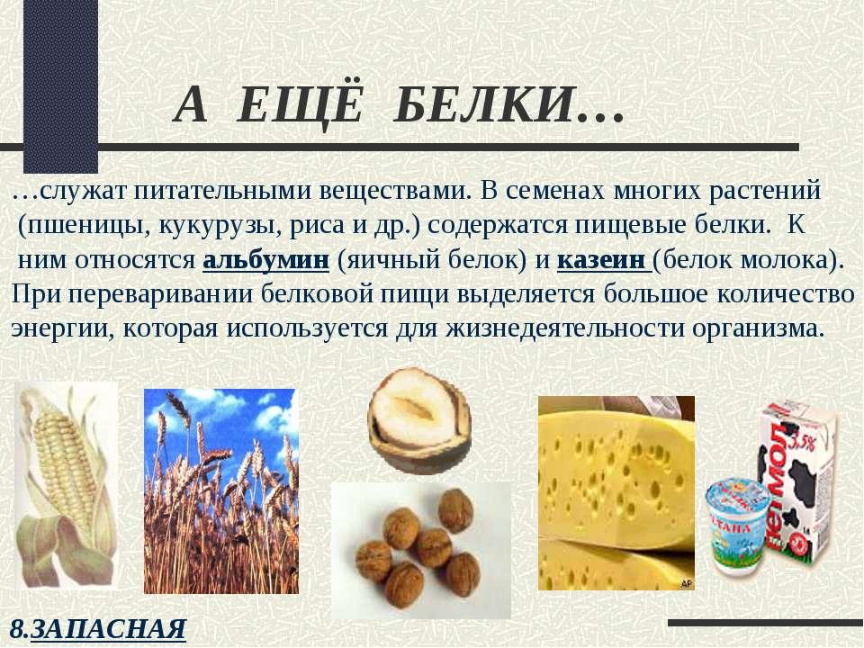 А ЕЩЁ БЕЛКИ… …служат питательными веществами. В семенах многих растений (пшен...