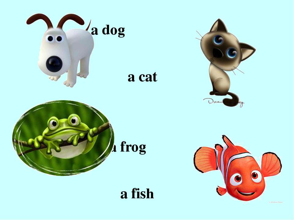 a dog a cat a frog a fish