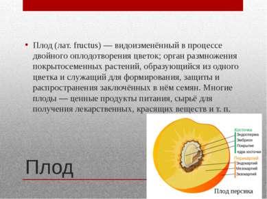 Плод Плод (лат. fructus) — видоизменённый в процессе двойного оплодотворения ...