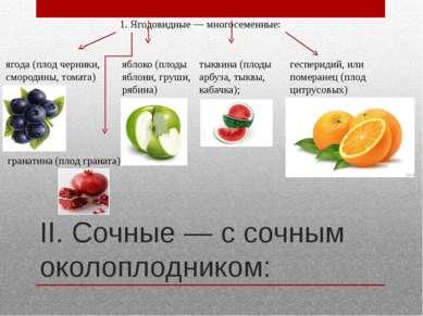 II. Сочные — с сочным околоплодником: 1. Ягодовидные— многосеменные: ягода (...