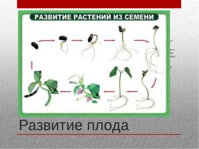 Развитие плода Как правило, плод развивается после оплодотворения, но у части...