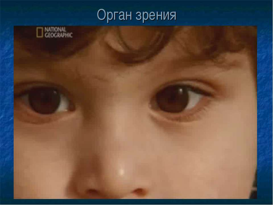 Орган зрения