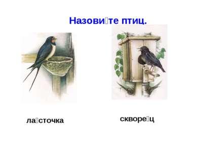 Назови те птиц. ла сточка скворе ц