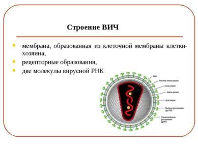 Строение ВИЧ мембрана, образованная из клеточной мембраны клетки-хозяина, рец...
