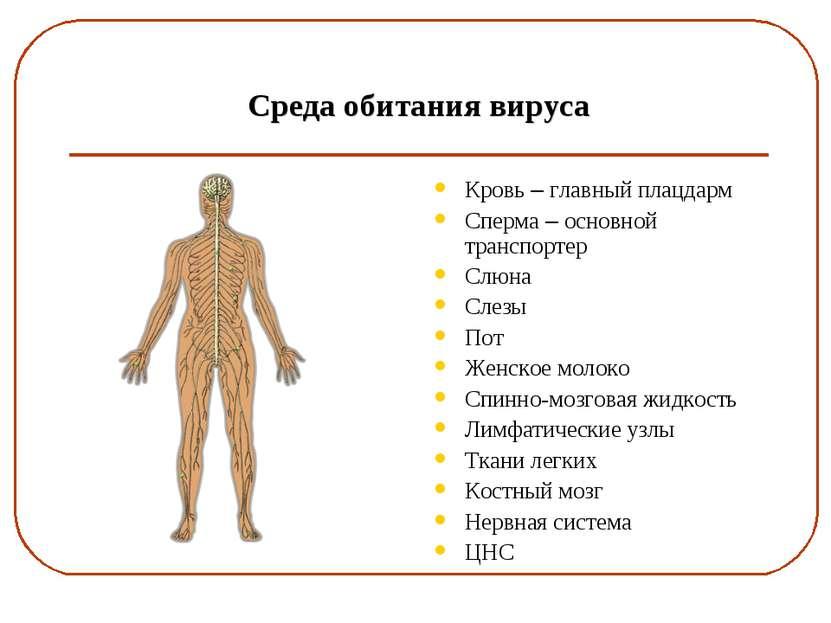 Среда обитания вируса Кровь – главный плацдарм Сперма – основной транспортер ...