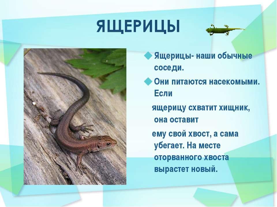 Ящерицы- наши обычные соседи. Они питаются насекомыми. Если ящерицу схватит х...