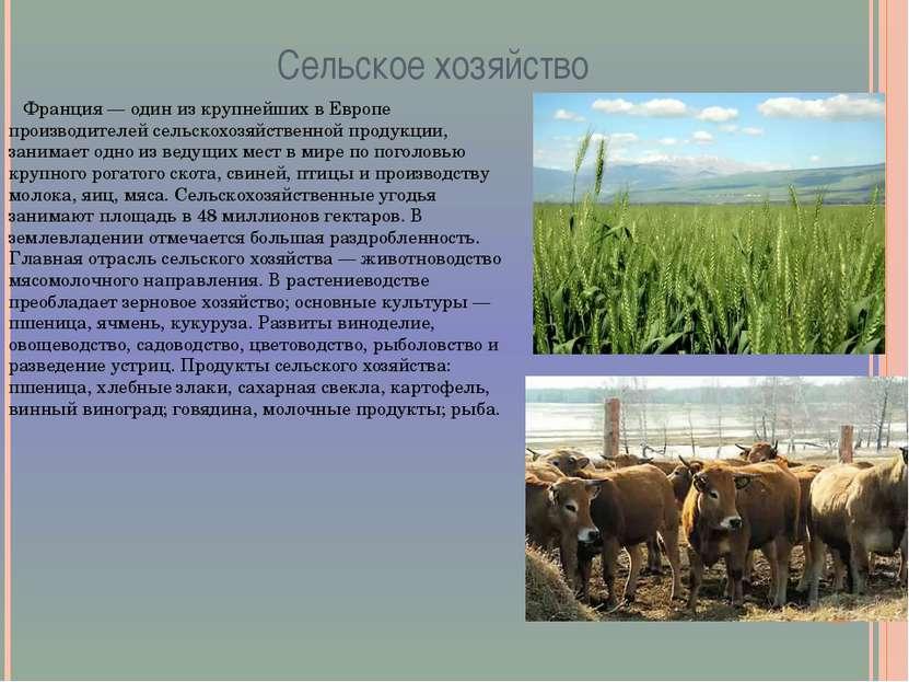 Сельское хозяйство Франция — один из крупнейших в Европе производителей сельс...