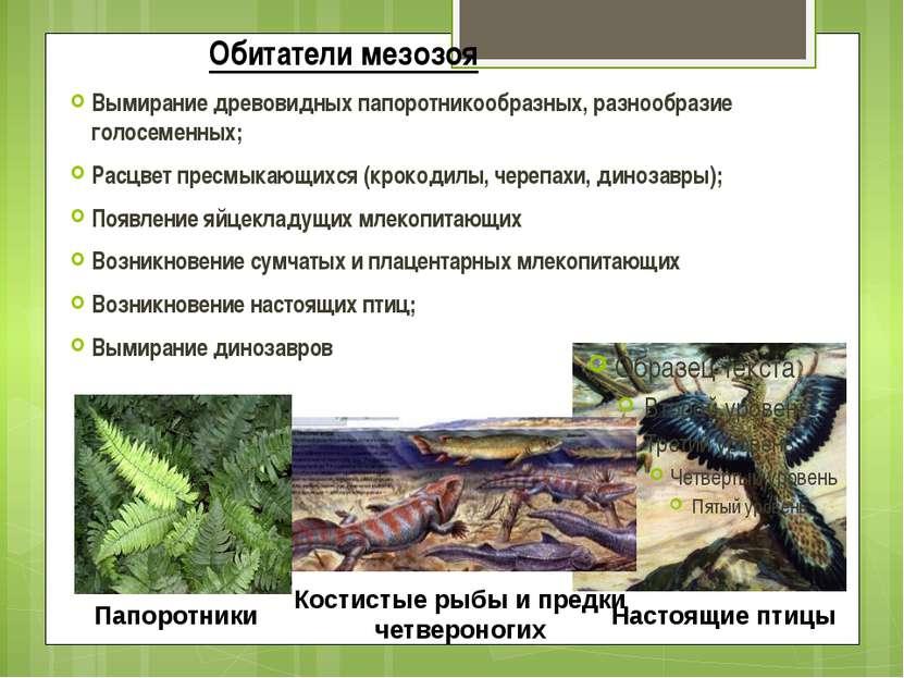 Обитатели мезозоя Вымирание древовидных папоротникообразных, разнообразие гол...