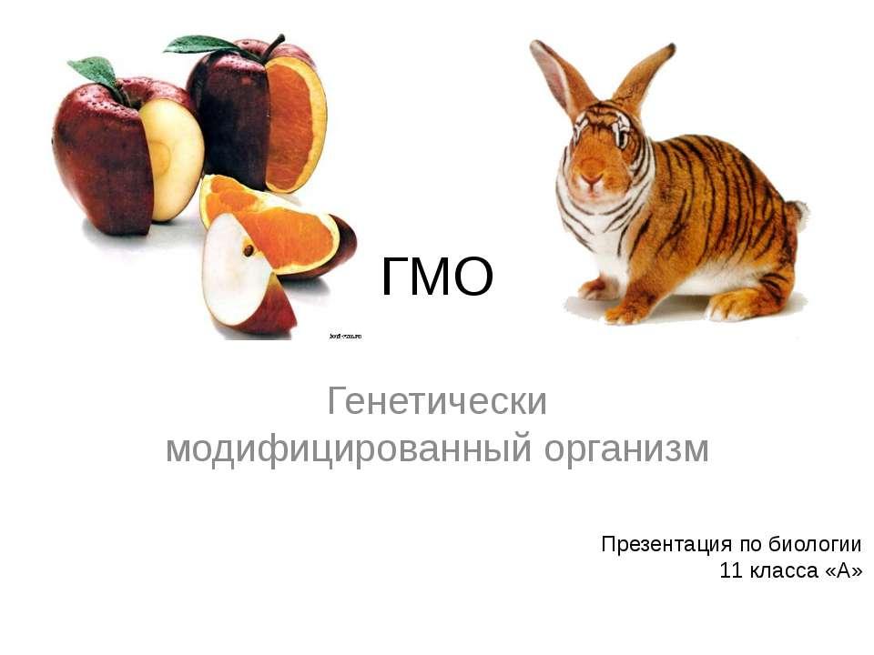 ГМО Генетически модифицированный организм Презентация по биологии 11 класса «А»