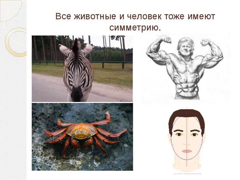Все животные и человек тоже имеют симметрию.