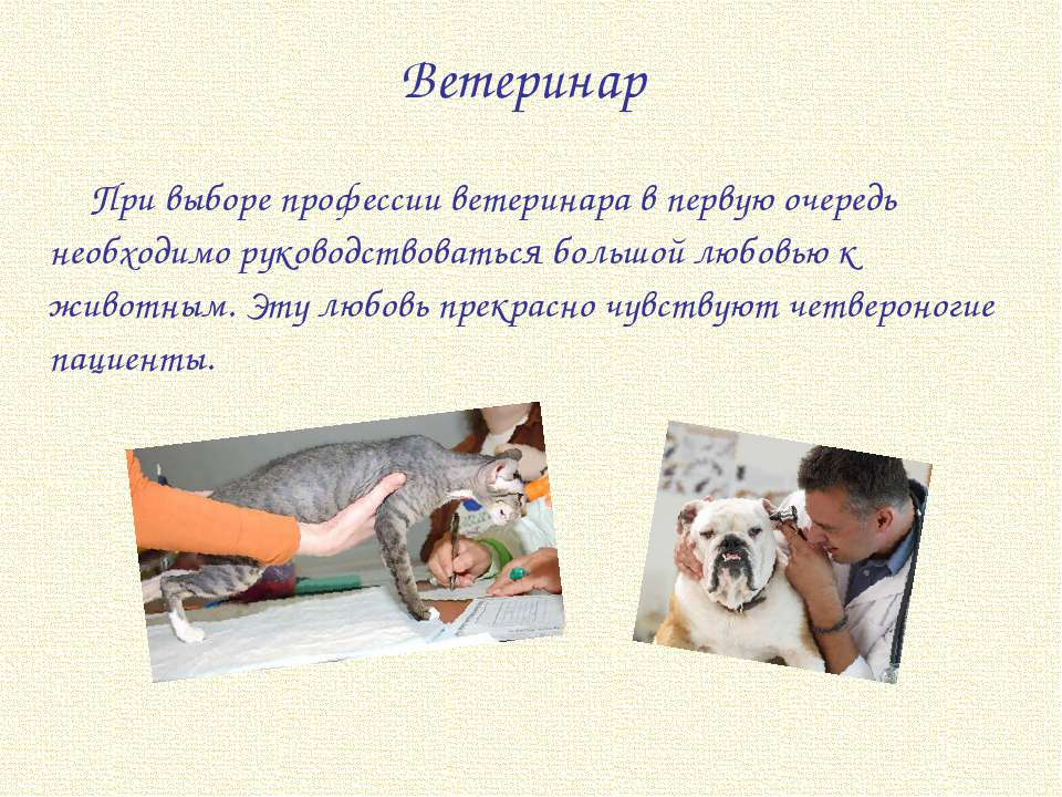 an overview of the profession of a veterinarian
