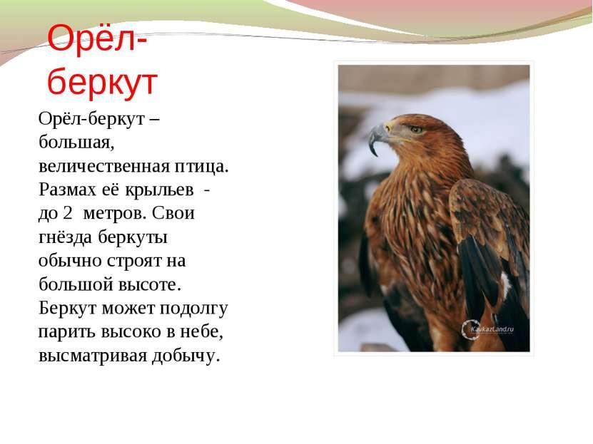 Орёл-беркут Орёл-беркут – большая, величественная птица. Размах её крыльев - ...