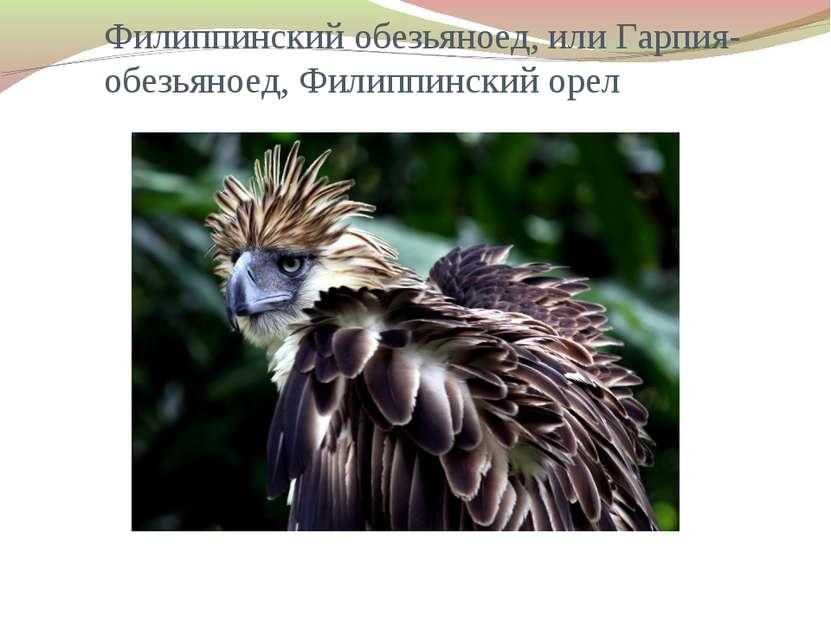 Филиппинский обезьяноед, или Гарпия-обезьяноед, Филиппинский орел