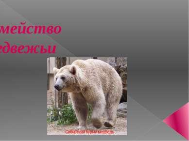 Семейство Медвежьи Сибирский бурый медведь