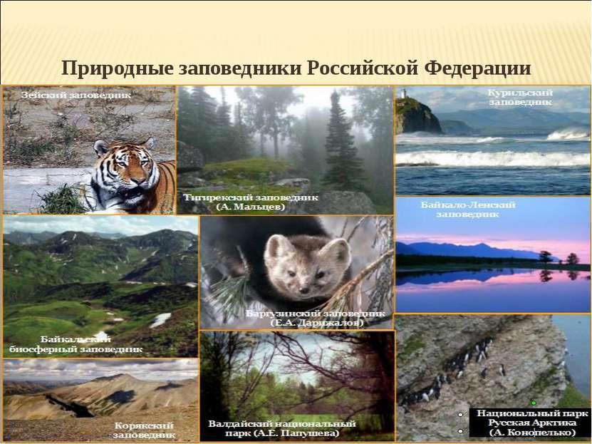 Природные заповедники Российской Федерации