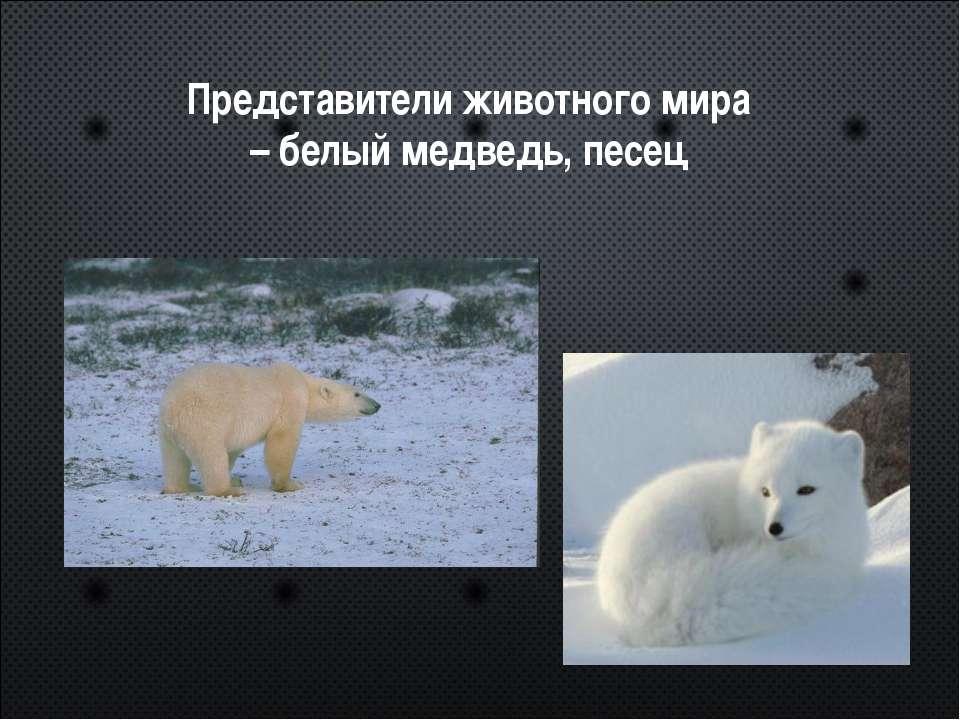 Представители животного мира – белый медведь, песец