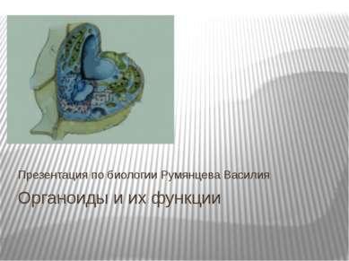Органоиды и их функции Презентация по биологии Румянцева Василия