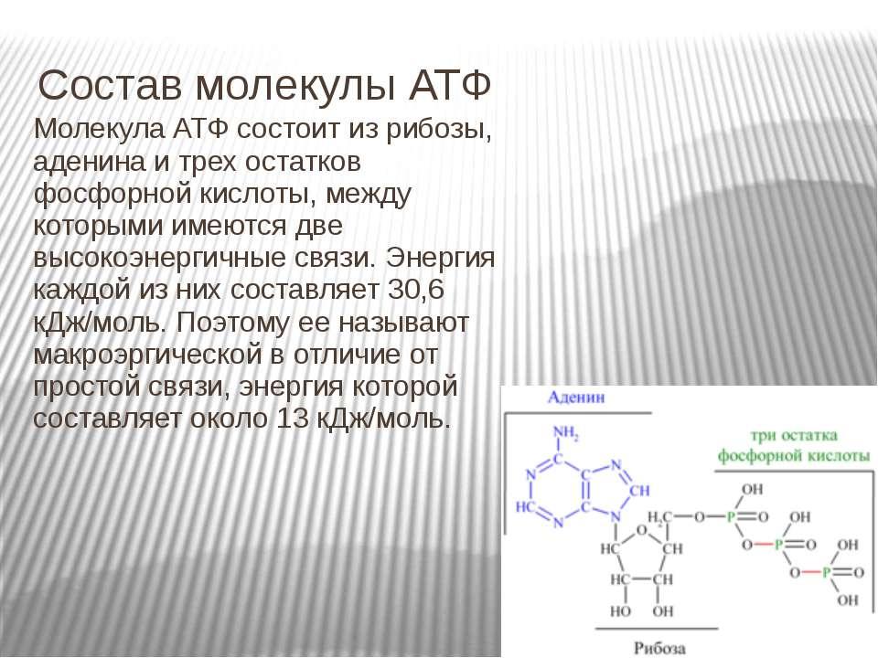 Состав молекулы АТФ Молекула АТФ состоит из рибозы, аденина и трех остатков ф...