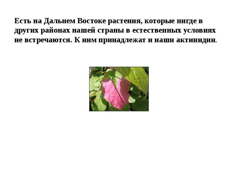 Есть на Дальнем Востоке растения, которые нигде в других районах нашей страны...