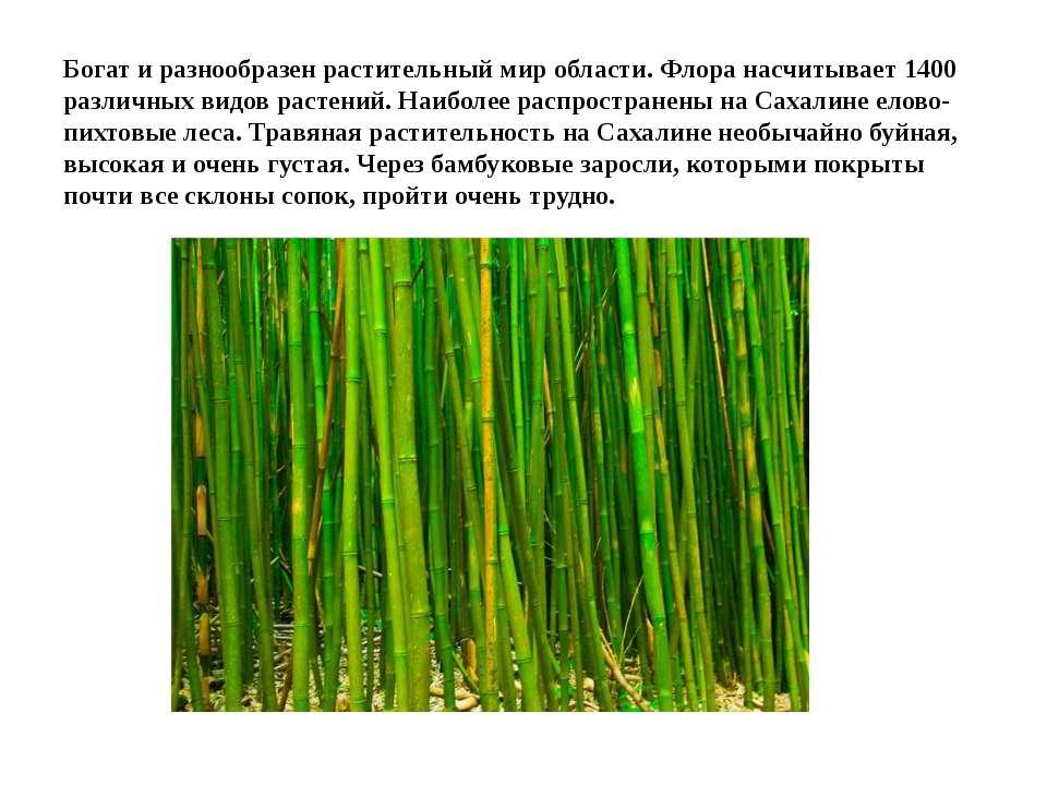 Богат и разнообразен растительный мир области. Флора насчитывает 1400 различн...