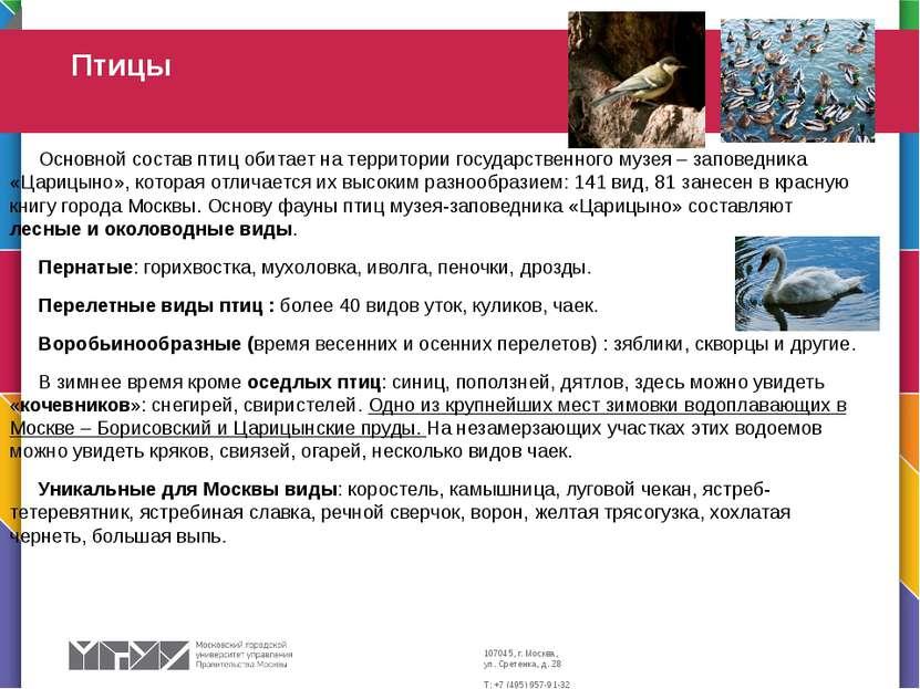 Основной состав птиц обитает на территории государственного музея – заповедни...