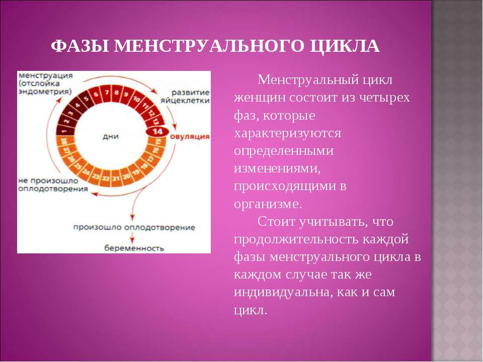 ФАЗЫ МЕНСТРУАЛЬНОГО ЦИКЛА Менструальный цикл женщин состоит из четырех фаз, к...